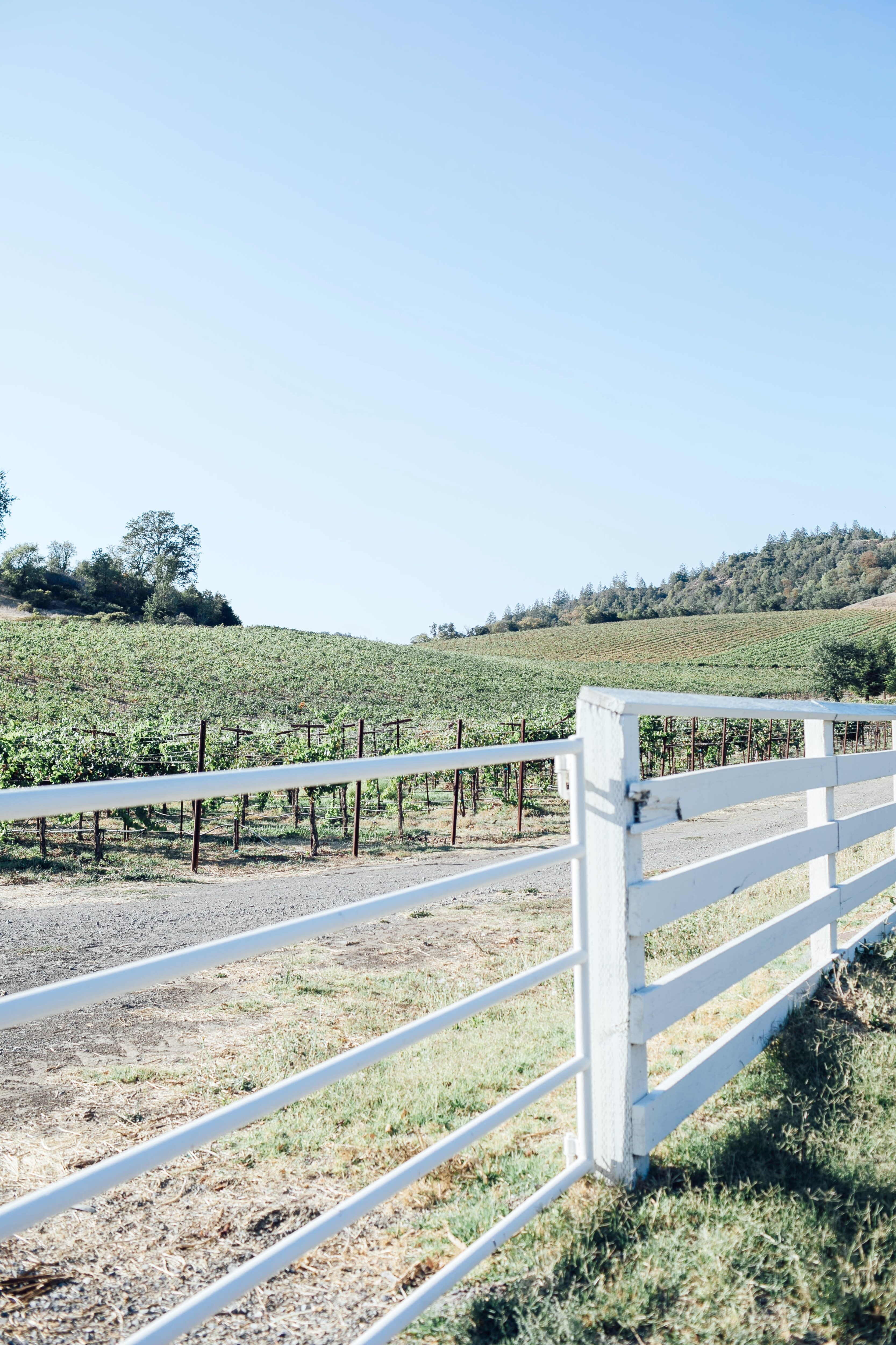 The 5 Best Vineyards in Healdsburg, CA featured by top US travel blogger, Walking in Memphis in High Heels.